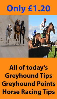Product Image - Horse and Greyhound Tips Updated Daily
