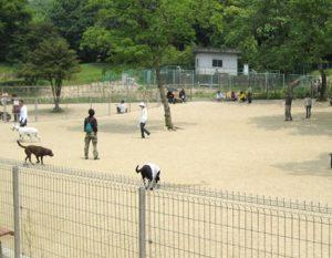 名古屋・大高緑地ドッグラン