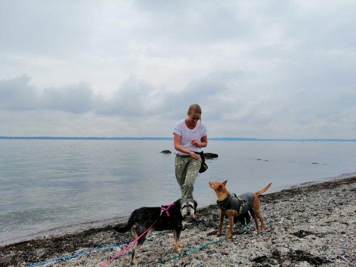 nadine waizenhöfer-kledwig dogs-human-friends hundetrainer