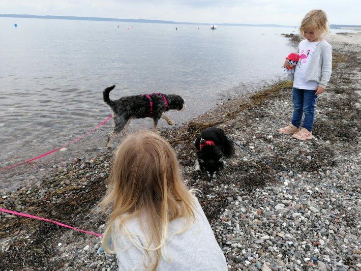 kind und hund hundeschule buchenberg dogs-human-friends