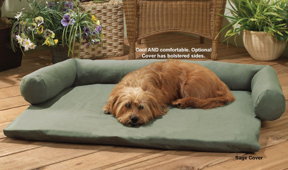 porch lounge chair costco desk chairs fun summer dog products you might not think of | times guide to dogs