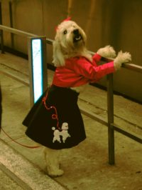 Fun Homemade Halloween Costumes You Can Make For Your Dog ...