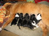 Dog Labor & Delivery: What To Expect On The Day Your Dog's ...