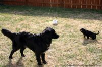 Reader Question: How Do You Stop A Dog From Peeing On The ...