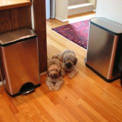 Trash Cans For Kitchen With Apron Sink Best Dog Proof & Tips Keeping Your Out ...