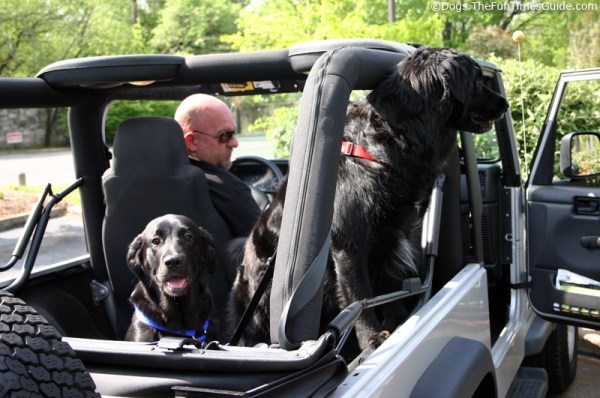 Tips For Dogs Riding In Cars Jeeps The Jeep Guide