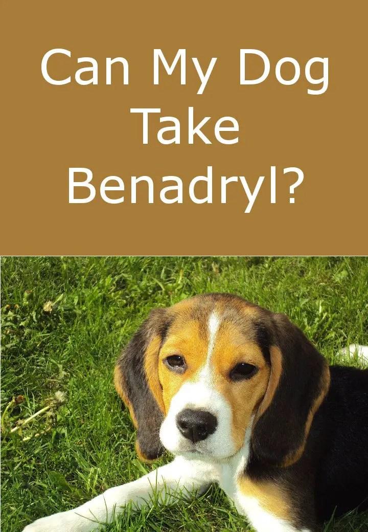 Is Benadryl Safe For My Dog?