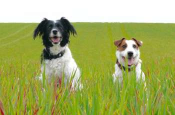 Terminally Diagnosed Canines Have a Great Time Together