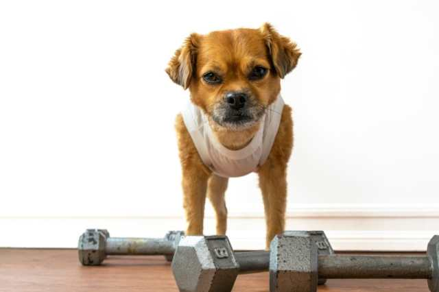 Effective Ways to Help Yor Dog Maintain a Healthy Weight