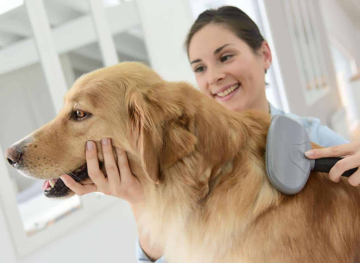Reduce dog hair shedding with regular grooming and a
