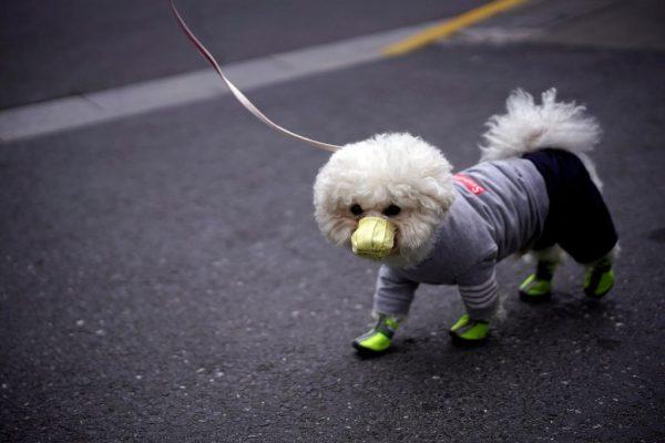 Dog corona virus