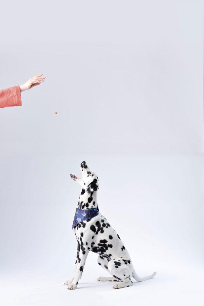 dog walker accolades