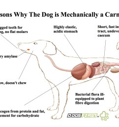 a diagram showing 7 reasons why the dog is mechanically a carnivore [ 1485 x 1050 Pixel ]