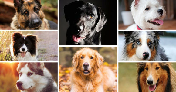 Picking a Dog Breed picking a dog breed! Picking a Dog Breed! breeds 580x304