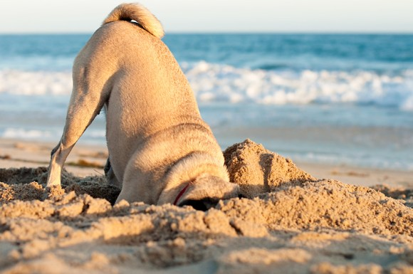 Stop Dogs from Digging!