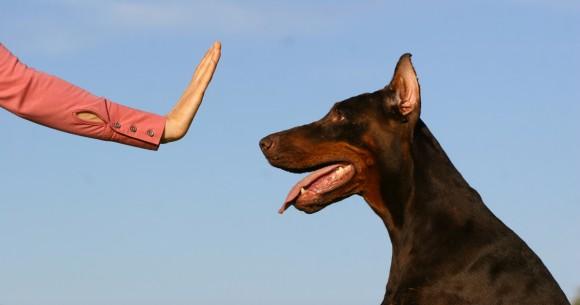 Dogs Training Tips dogs training tips Dogs Training Tips dog training 580x305