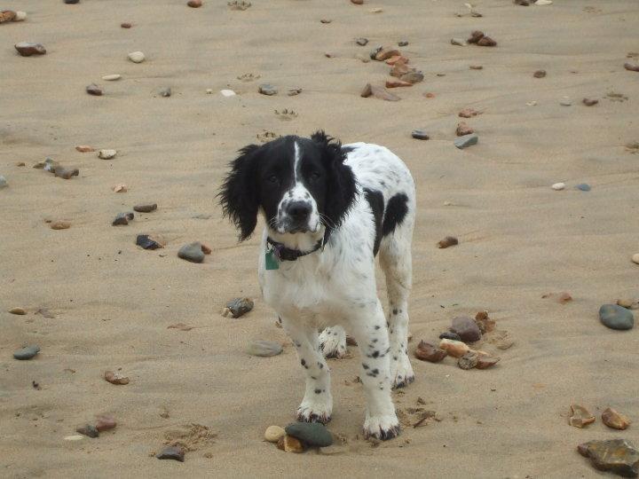 Choosing the Right Puppy - Aptitude TEST