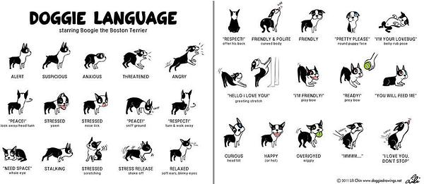 How to Read Dog Body Language