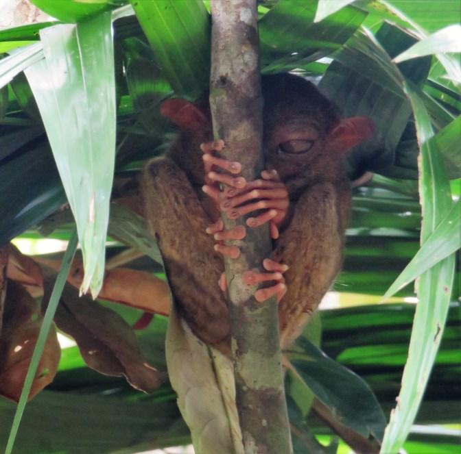 tarsier-sanctuary-10