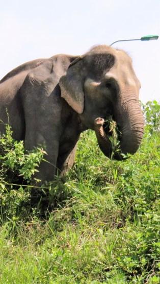 elephant-crossing-4