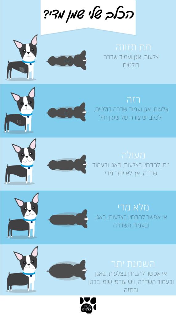 השמנה בכלבים - כך תוכלו לדעת (מגזין כלבים)