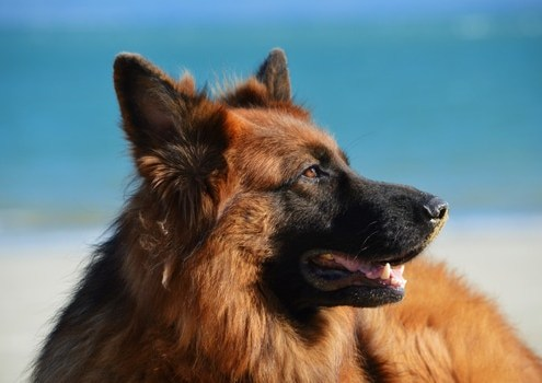 Dog-Teeth-Healthy-Brush-Top-Ten-Tips-PlaqueOff-2