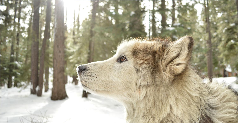DogSolutions-3