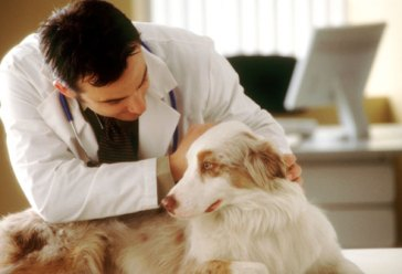 corbis photo - vet examining dog