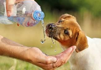 dog-drinks-water