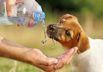dog-drinks-water