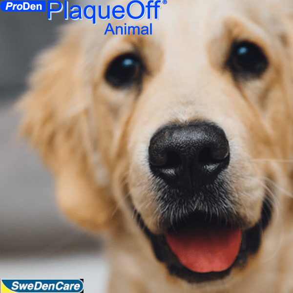 Proden-Plaque-Off-SA-Exclusive-Importer-Incredible-Product-Bad-Breath-Dogs-Gum-Health-Teeth