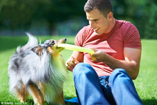 guy-with-sheltie-and-frisbee