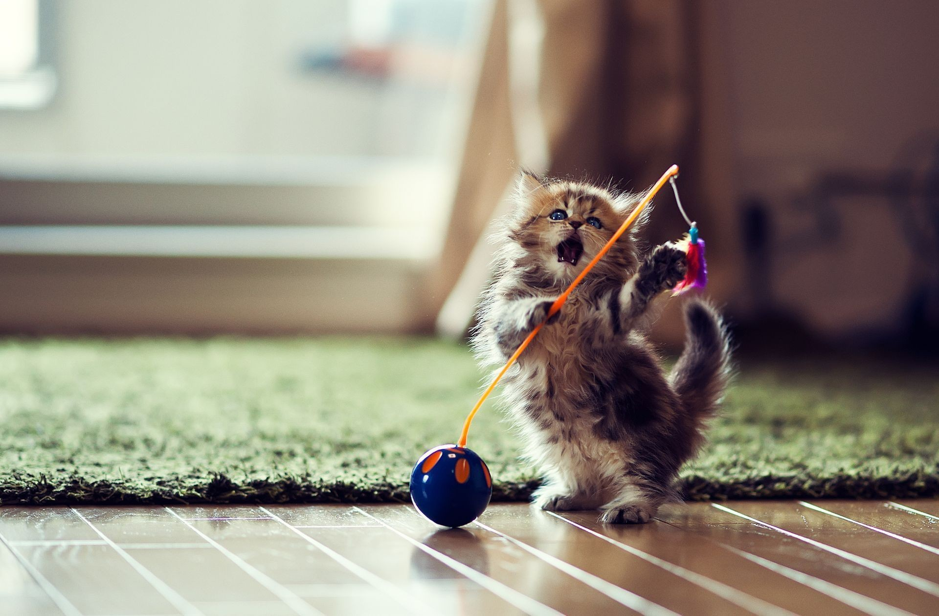 Kitten with Toy