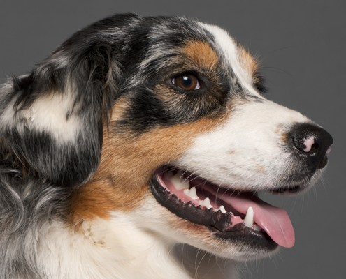 Exceptional Health Product Solutions for your Pet - Dog