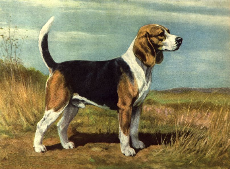 Image result for beagle painting