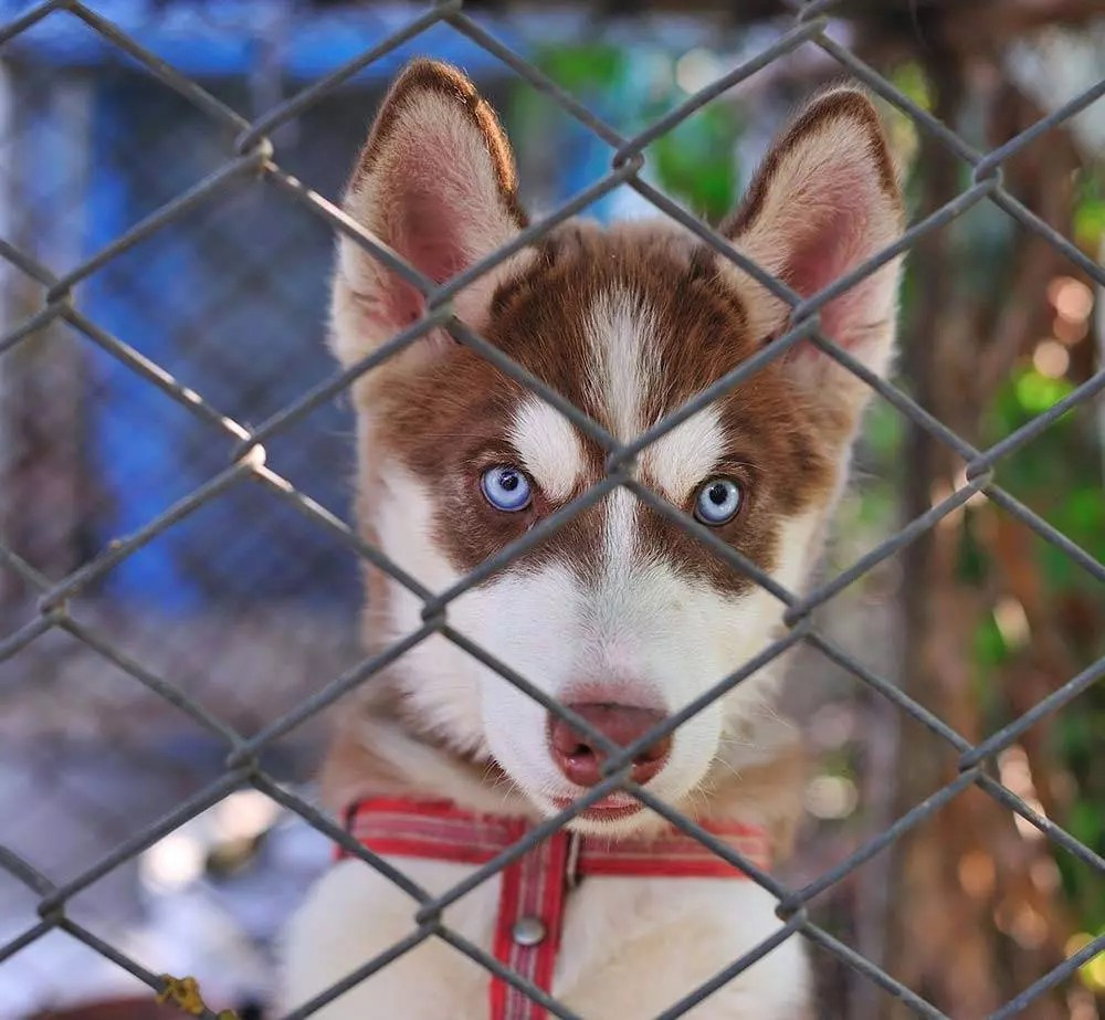 Top 5 Best Dog Crates For Huskies In 2019 Dogstruggles