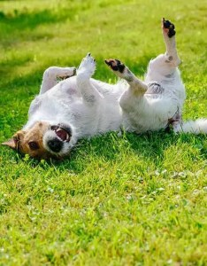 Zyrtec for dogs dosage and side effects also guide in dogstruggles rh