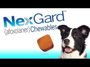 NexGard Chewables Review 2