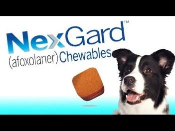 Dog Health & Embrace Pet Insurance Review 4
