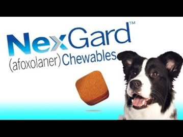 Advantage... vs Nexgard - Best Flea Treatments 6