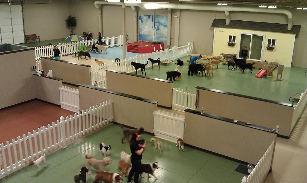 Inside dog daycare