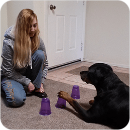 Brain Training For Dogs Review 3