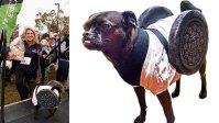 Howl-O-Ween: 10 Homemade Halloween Dog Costume Ideas for ...