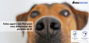 dogtector logo et taux de satisfaction