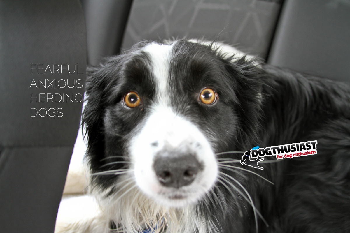 Four ways to help an anxious and fearful dog * DOGthusiast: for dog