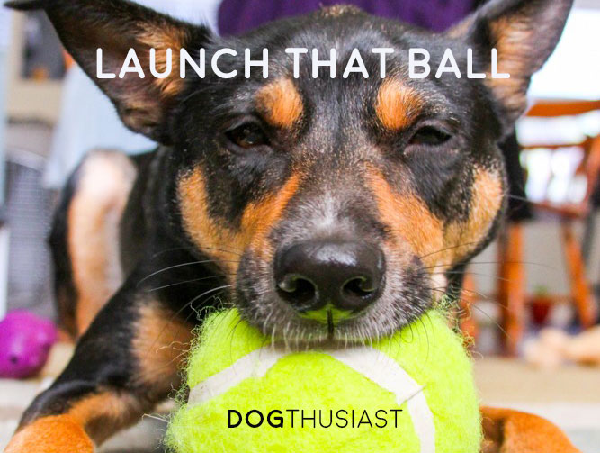 4 options for building a tennis ball cannon for dogs: the research