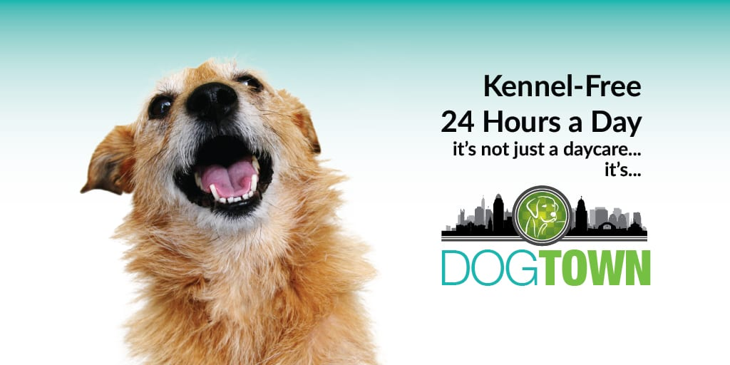 Kennel-free_24-7