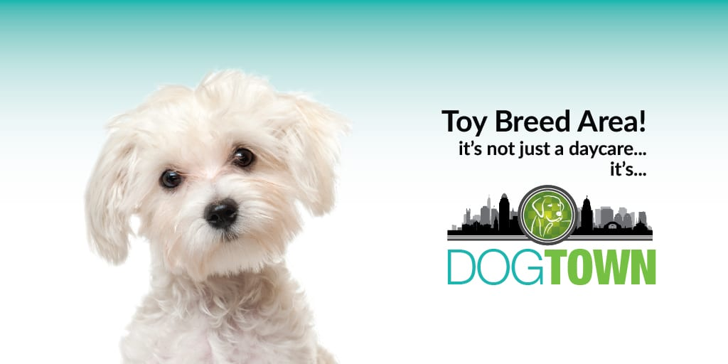 Toy-Breed-Area