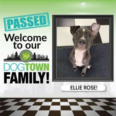 ELLIE-ROSE