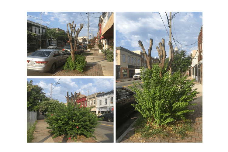 City Workers Hack & Kill Trees on Hull Street